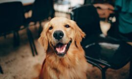 Allergische Hunde richtig füttern