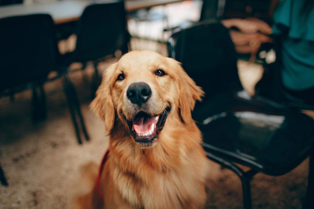 You are currently viewing Allergische Hunde richtig füttern