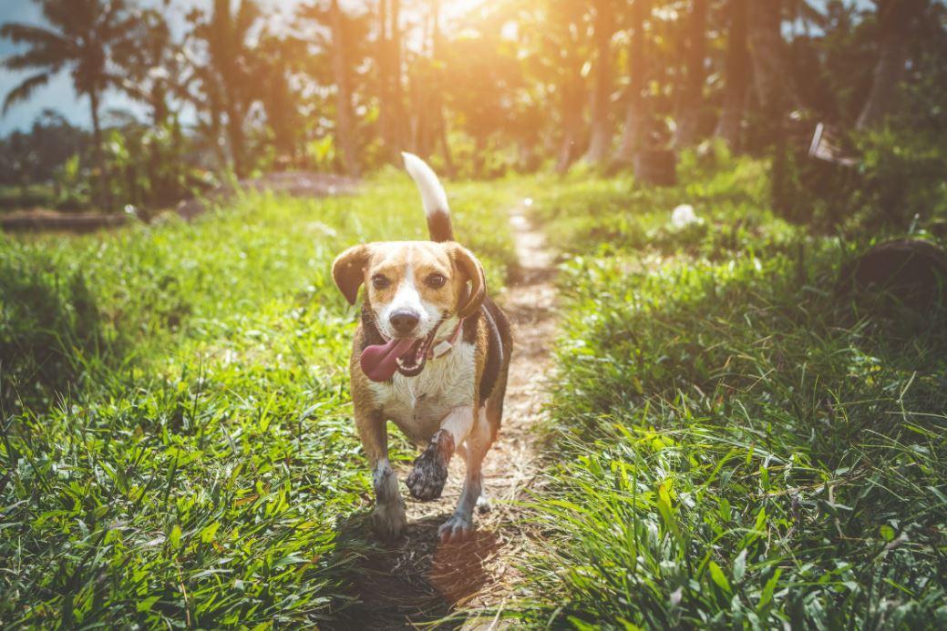 Hundefutter für Allergiker