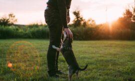 Wohlempfinden des Hundes steigern