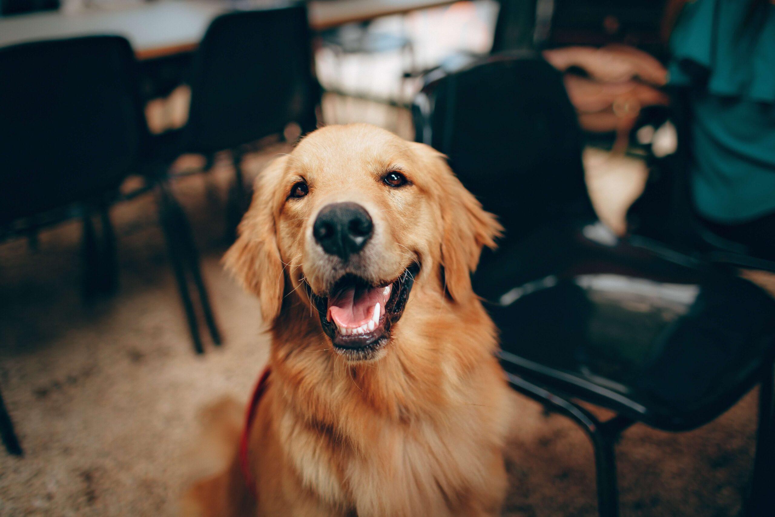 You are currently viewing Hundefutter für Allergiker Hunde